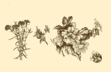 植物裝飾畫圖片